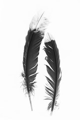 Native American indian Feathers in Black and White