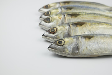 Fresh chub Mackerel on white background. Selective focus