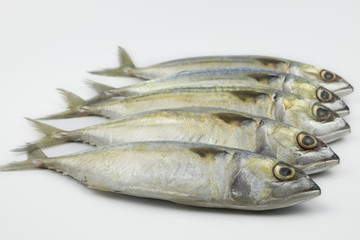 Fresh chub Mackerel on white background