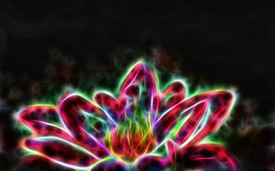 Lotus flower and black background.  Illustration collage fractal effect