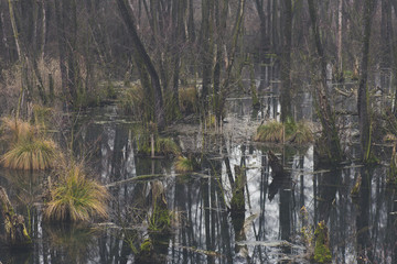 Mystic foggy swamp with dead trees, Fényes spring at Tata, Hungary
