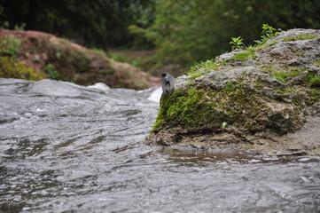 Little bird sittingon a rock over a river