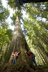 Three friends hug a massive redwood in California.