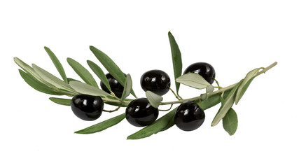 olive branch with black olives on white background isolated