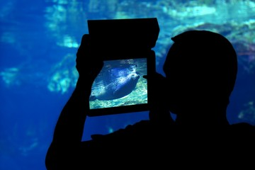 silhouette of a man photographing a seal aquarium