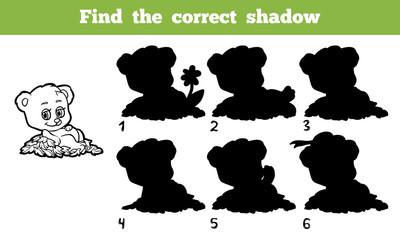 Find the correct shadow (bear)