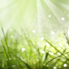Green abstract nature background with sunlight