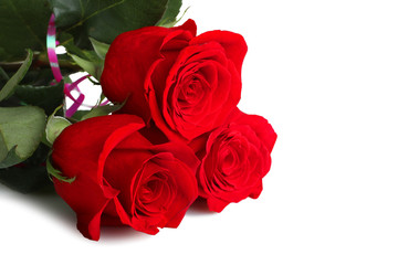 rich red roses on white isolated background