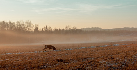Photo sur Toile Chasse Autumn landscape with a hunting dog.