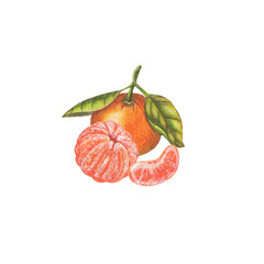 Watercolor tangerine