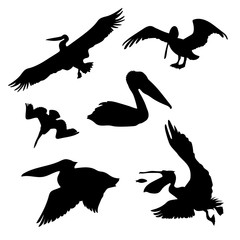 Pelican set vector