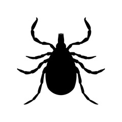 Tick parasite. Sketch of Tick. Mite. Tick isolated on white background. Tick Design for coloring book