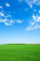 Photo sur Toile Sauvage green field and blue sky