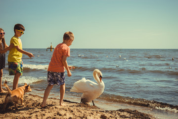 Little girl boys kids on beach have fun with swan.