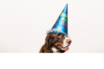 funny dog wearing a new year's party hat