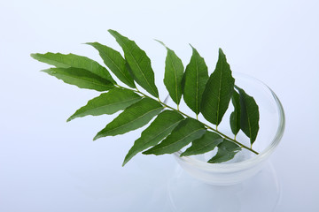 Healthy curry leaves