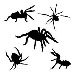 Spider set vector