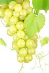 grappe de raisins blancs