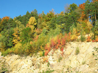 Wall Mural - bright colorful trees in autumn growing on the rock