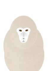 ベージュの猿 上半身 顔