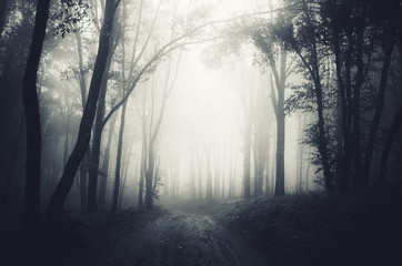 Foto op Canvas Bos dark forest fog