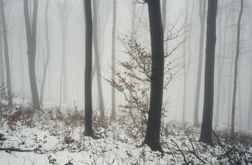 tree with orange leaves in forest in winter
