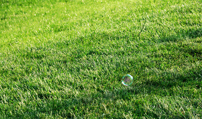 Soapy bubble on green grass