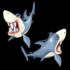 Two fish sharks on a black background, two sides