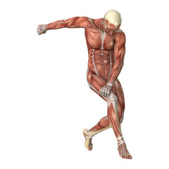 Male Figure Muscle Maps