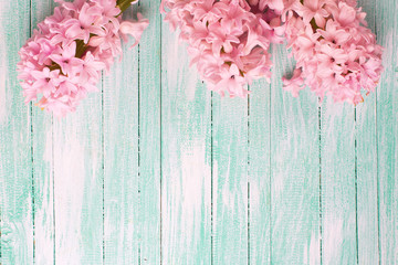 Fresh pink flowers hyacinths  on turquiose painted wooden planks