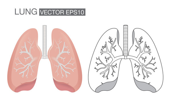 Lung color and outline vector. Health care and medical illustration.