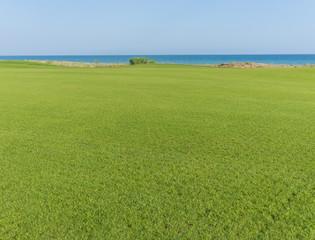 Wall Murals Green Perfect grass meadow