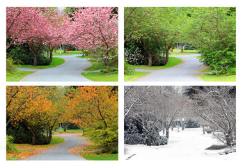Four seasons of cherry trees on the same street. all images taken from the exact same location.