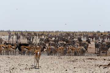 crowded waterhole with wild animals