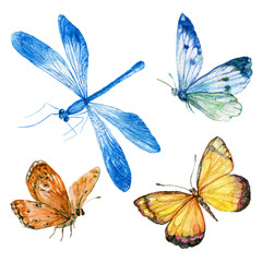 set butterfly watercolor