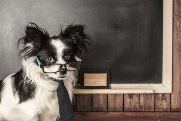 Dog as a school teacher with glasses and tie