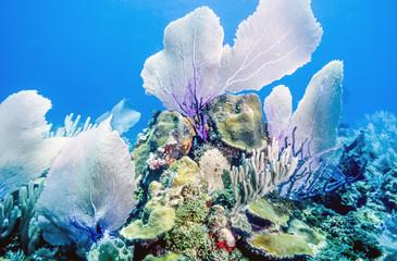 Aluminium Prints Under water Underwater coral reef