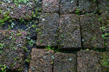 Wall Mural - Closeup of the weathered stone pathway with small plant