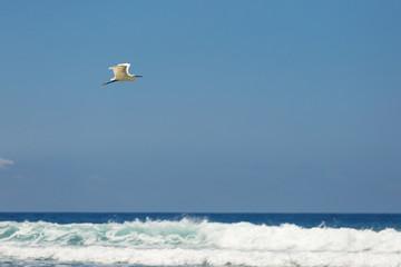 White bird flying over white waves