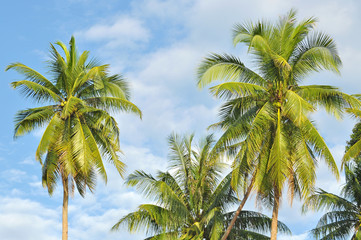 Coconut or palm tree with clouds and blue sky and copyspace area