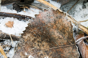 frozen leaf with frost and ice