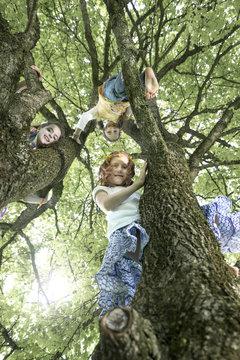Girls climbing on tree, Munich, Bavaria, Germany