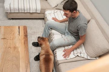 Young man taking care of Shar Pei and Bull Terrier