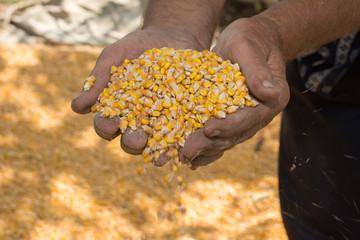hand corn