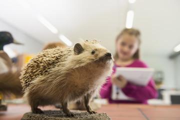 Schoolgirl making drawing of a hedgehog in biology class, Fürstenfeldbruck, Bavaria, Germany