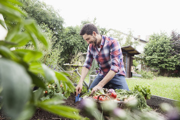 Man gardening in vegetable patch