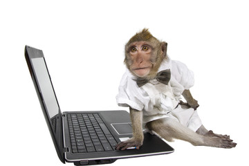 A monkey in a suit with a laptop