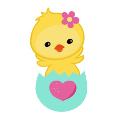 Greeting card.Cute chick congratulates on a white background.