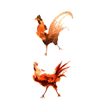 Two watercolor cocks. Hand drawing.
