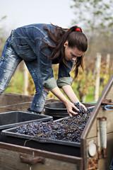 Croatia, Baranja, Young  woman holding grapes